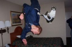"Ninja Cat!  ""Take that big guy!  I may be little, but I'm tough!"""