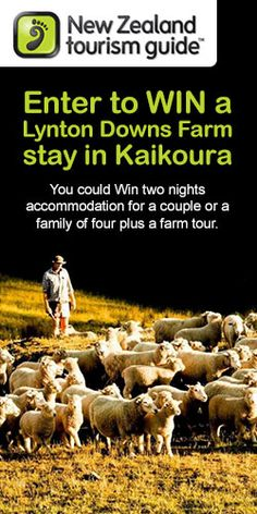 Win a Lynton Downs Farm Stay in Kaikoura! #competition #travel