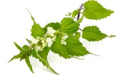 10 Foods that Fight Spring Allergies  http://www.rodalewellness.com/health/allergy-relief