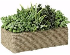 Succulents In Rectangular Wound Rope Pot - traditional - plants - Amazon