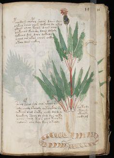 The Voynich Manuscript Voynich Manuscript, Medieval Manuscript, Illuminated Manuscript, Botanical Drawings, Botanical Illustration, Botanical Prints, Ancient Mysteries, Art Graphique, Old Paper