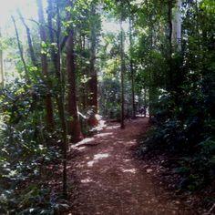Bush walking Mt Tamborine today, the Gold Coast Hinterland.  #rainforest # goldcoast