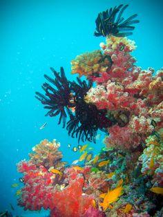 44 surreal scenes from Australia's Great Barrier Reef - Matador Network