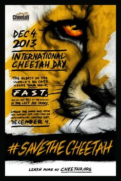 Save the Cheetah!