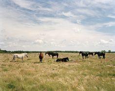 Felix Odell: Landscapes - Thisispaper Magazine
