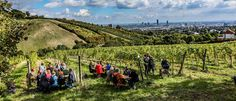 The Wiener Weinwandertag makes it easy to get to know Vienna's vintners on their own turf while getting some fresh air and a dose of nature. Vienna, Vineyard, Dolores Park, Nature, September, Travel, Outdoor, Easy, Walking Routes