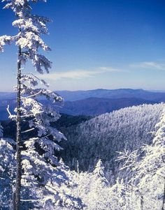 99 Best Smoky Mountains In The Winter Images In 2020