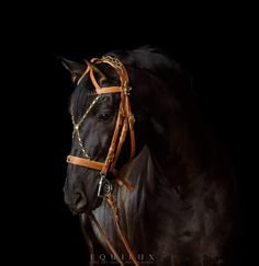 Fancy Schmancy, Horse Tack, Dressage, Equestrian, Horses, Animals, Leather, Animales, Animaux