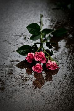 Rose Flower Wallpaper, Sunflower Wallpaper, Two Roses, Blue Roses, Pretty Flowers, Flower Box Gift, Flower Frame, Beautiful Flowers Wallpapers, Street Photography