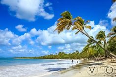 #Plage de Grande Anse des #Salines. Sable blanc, eaux turquoise et #cocotiers.  #Martinique #FWI #Caraïbes