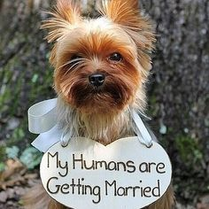 How cute is this wedding announcement. Maybe have your doggie walk down the aisle like this