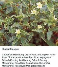 Fruit Plants, Herb Plants, Back To Nature, Medicinal Plants, Herbal Medicine, Healthy Tips, Natural Health, Natural Remedies, Herbalism