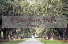 Erika Bennett: Rules of a Southern Belle