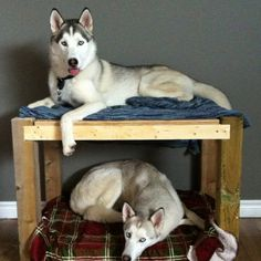 The bunk bed!