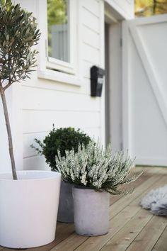 House Entrance Outdoor Potted Plants 51 Ideas For 2019 Terrace Garden, Garden Pots, Outdoor Spaces, Outdoor Living, Scandinavian Garden, Exterior, Plantation, Play Houses, Garden Inspiration