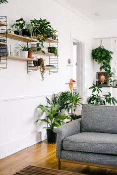 West Elm   A Plant Filled Mid Century Inspired Colorado Home