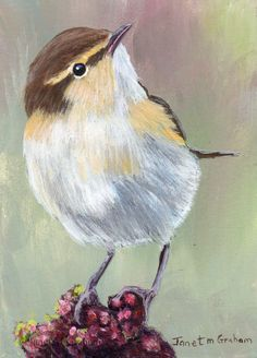 Common Chiffchaff ACEO / Bird / Wildlife / Original Acrylic ACEO painting by Australian Artist Janet M Graham by ArtDownUnder on Etsy