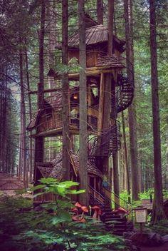 cabin in wood