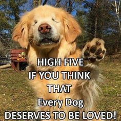 *high fives* DOGOOS ARE BEST HIGHT FIVES X 1000