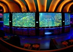 19 best living color aquariums commercial installations images on