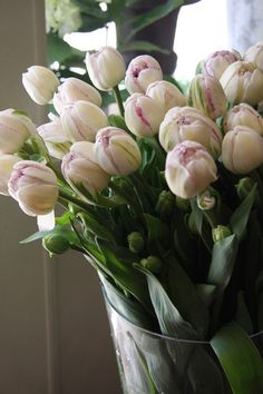 Old fashion 17th C style Tulips. White with some reddish pink