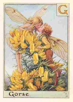 The GORSE Fairy ~ Cicely Mary Barker ~