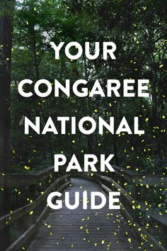 Visiting Congaree National Park? Save this pin and click through to find out everything you need to know for your visit. Included is a list of the 7 best things to do in Congaree National Park, a guide to learn about the synchronous fireflies, how to join a ranger-led canoeing or kayaking trip, and more. Also, get tips on what to pack and find out the best time to visit. // Local Adventurer #localadventurer #discoverSC #southcarolina #visittheusa #realcolumbiasc