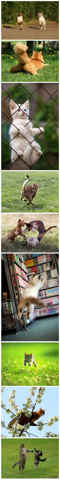 Cats can play