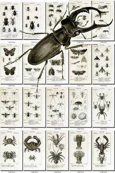 INSECTS-39-bw Collection of 178 vintage illustrations Termite