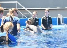 Dolphin abuse video done which is being by trainer José Luis Barbero in Spain at MarineLand Mallorca,   http://www.ecoticias.com/naturaleza/99944/Maltrato-delfines-Marineland-Mallorca-video