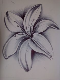 Tattoos Discover Pin by shailendra kariyare on art sketches pencil drawings draw art drawi Pencil Drawings Of Flowers Pencil Shading Flower Sketches Pencil Art Drawings Art Drawings Sketches Cartoon Drawings Amazing Drawings Love Drawings Easy Drawings Amazing Drawings, Cool Art Drawings, Art Drawings Sketches, Easy Drawings, Tattoo Drawings, Body Art Tattoos, Drawing Ideas, Lilies Drawing, Shading Drawing