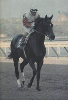 Ruffian - she was beautiful and amazing... she was all heart and Ruffian also had the great bloodlines of Nearco in her veins, the undefeated Italian champion