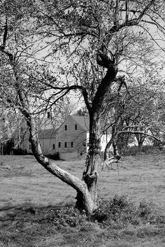 Wagon Hill Farm, Durham, New Hampshire