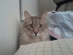 This is the cat that is like a dog!