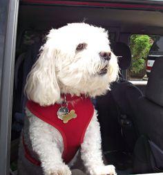 Basil  http://krislhurst.blogspot.com/