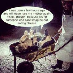 vegan: ditch the dairy, a very cruel industry