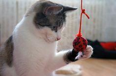 What is the best Cat-Toy? Cotier.de is testing!