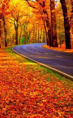 Road treep