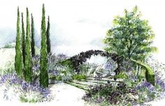 Hand rendered drawing for garden designers by Helen Thomas