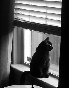 "Cat at the window""...."