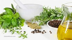 Jenny's Living Space: Natural antibiotics to stockpile now: 10 herbs and...
