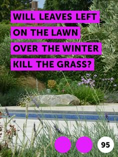 Learn Removing Bahia Grass From Centipede Grass How To Grow Dragon Fruit, Dragon Fruit Plant, Planting Blueberry Bushes, Lawn Grass Types, Centipede Grass, Turf Builder, Growing Moss, Bermuda Grass, Bahia