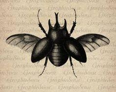 Image result for antique illustration scarab beetle