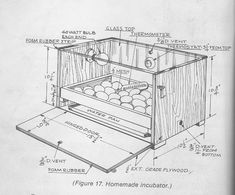 Here is another good home built incubator for school projects. AS well as it hatches seramas great! Homemade Incubator, Diy Incubator, Chicken Incubator, Backyard Chicken Coop Plans, Diy Chicken Coop, Chickens Backyard, Best Egg Laying Chickens, Raising Chickens, Chicken Breeds Chart