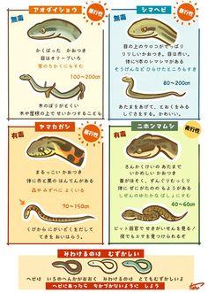 ヘビの見分け方