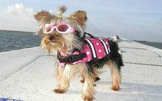 chaleco salvavidas para perro pequeño (talla s)