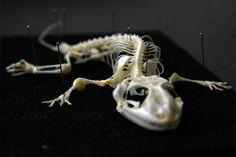 【Gecko_01】ヤモリ01