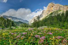 Flowers in the mountain meadow in Julian Alps   zkbld   Flickr
