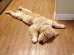 「生きてるのか不安なレベル…」さんざん遊んで力尽きた犬たちの写真21枚:らばQ
