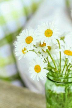 Wild Daisy's in a Green Mason Jar Little Flowers, Beautiful Flowers, Green Mason Jars, Driving Miss Daisy, Buffalo Check Fabric, Daisy Love, Daisy Daisy, Daisy Field, Garden Trellis